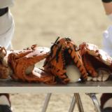 習い事-野球